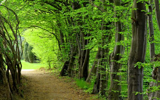 fashion-forest-trees-nature